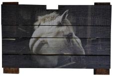 White horse in stall-Steve Truesdell
